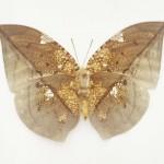 butterfly_0430