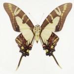 butterfly_0434