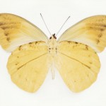 butterfly_0447