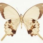 butterfly_0709
