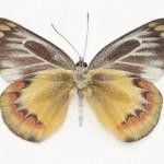 butterfly_0721