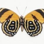 butterfly_0722