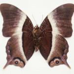 butterfly_0727